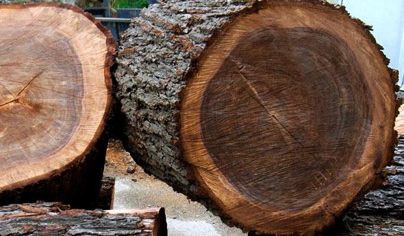 Walnut-wood-tree