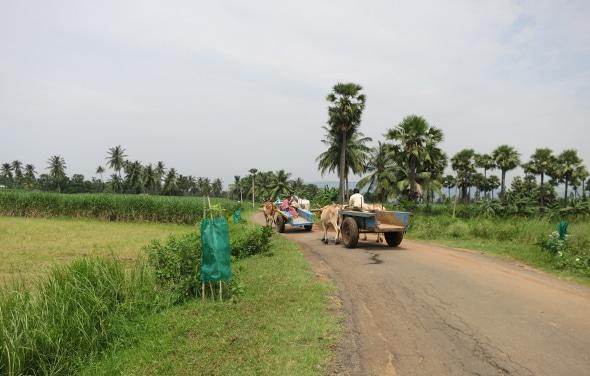 Andhra Bull Cart