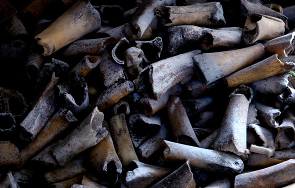 Bone for bone carving