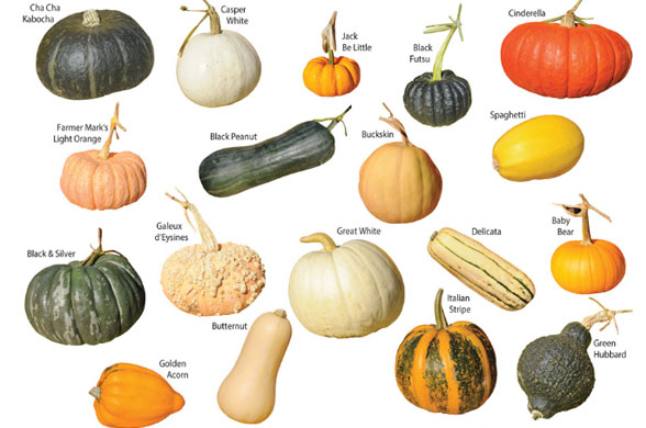 gourd types